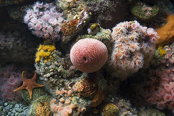 Melilla convoca un nuevo concurso de fotografía submarina