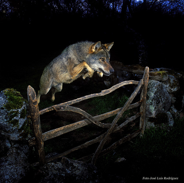 José Luis Rodríguez, Wild Photographer of the Year