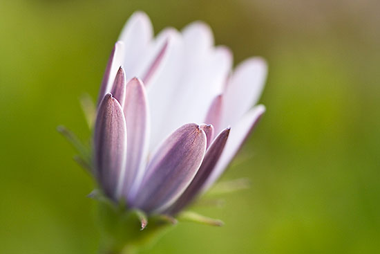 Fotos de verano: modestas flores
