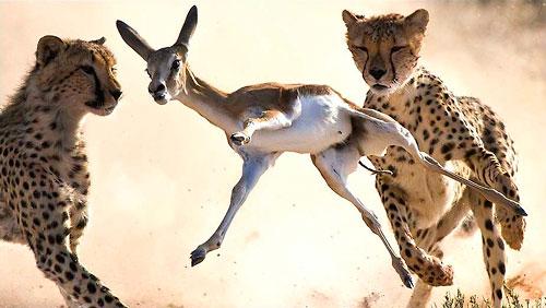 El Wild Photographer ya tiene ganador 2010