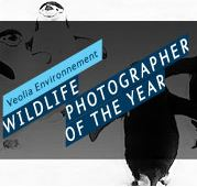 Abierto el concurso Wildlife Photographer of the Year 2011
