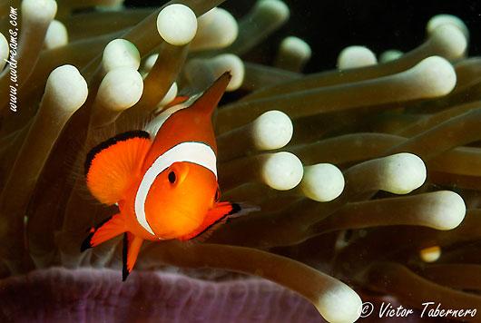 Curso de fotografía submarina en el Mar Rojo