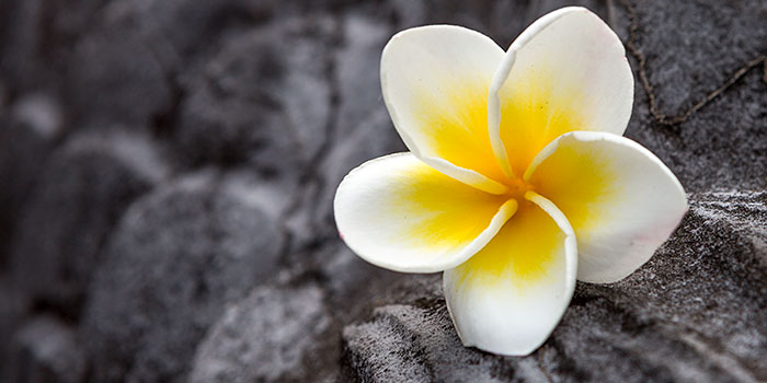 Omnifoto-Vietnam-flor