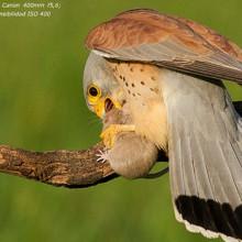 400 mm una revista gratuita de especializada en fotografía de aves