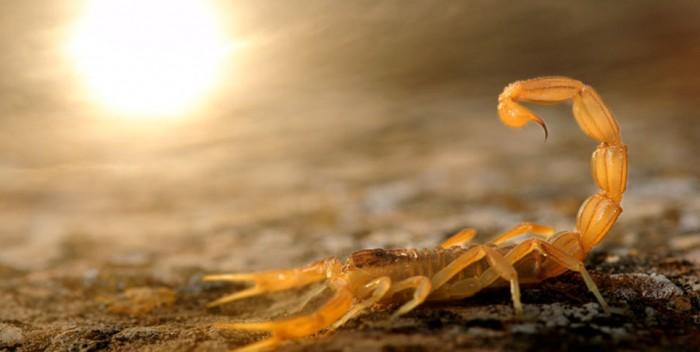 WPY-wild-scorpion_Carlos-Perez-Naval-