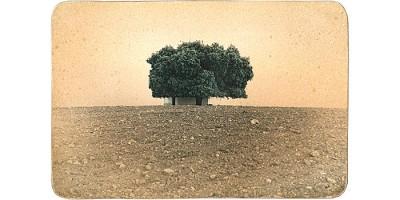 Tres miradas sobre el paisaje en la galería Espaciofoto de Madrid