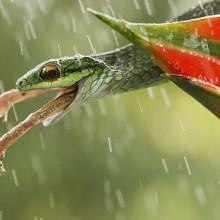 Número 23 de la revista de fotografía LNH, una mirada refrescante a la naturaleza