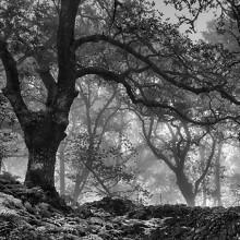 Memorandum Natura, un delicado libro de autor con la vision de María Antonia García de la Vega sobre los bosques