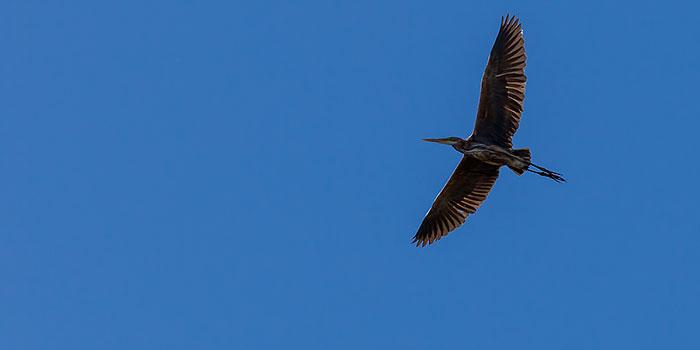Concurso de fotografía de aves con 5.000 euros de premios
