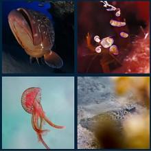 Concurso de fotografía submarina con 25.000 € en premios