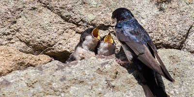 MADbird Fair, cita obligada para los fotógrafos de naturaleza en Madrid