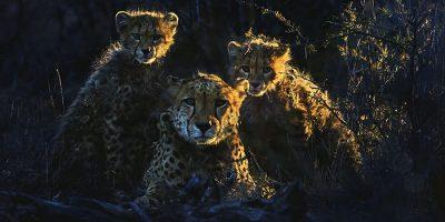 Inspiración + Naturaleza, un magnífico libro de fotografía de fauna de Marina Cano