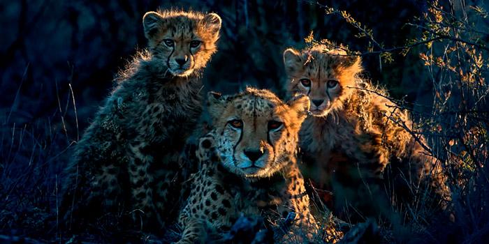 Marina Cano presenta el jueves en Madrid Inspiración + Naturaleza, un magnífico libro de fotografía de fauna