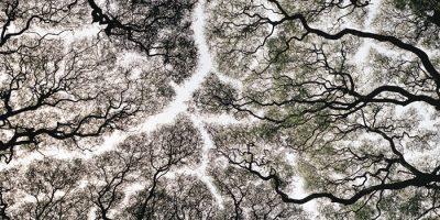 El concurso Internacional de Fotografía de Banca March ya tiene gnadores