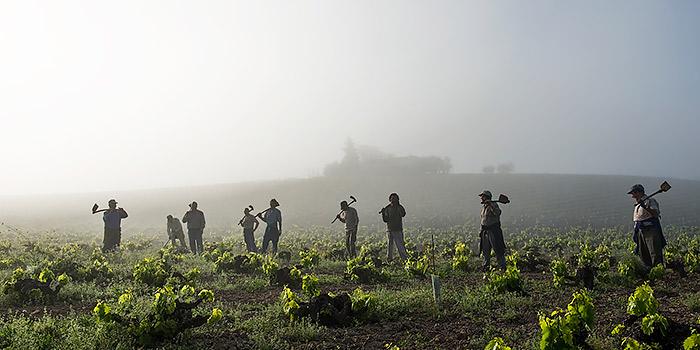 Concurso de fotografía sobre vino y vendimia con 2.000 Euros de premio
