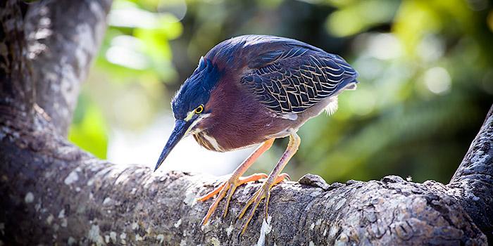 La fotografía de aves va a contar con restricciones legales en Extremadura