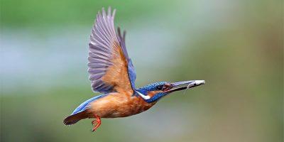 Fonat-Foto II Concurso internacional de fotografía de naturaleza