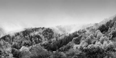 Exposición Memorandum Natura, los misteriosos bosques de María Antonia García de la Vega