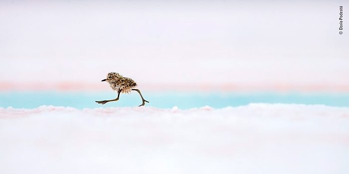 Wildlife Photographer of the Year 2018