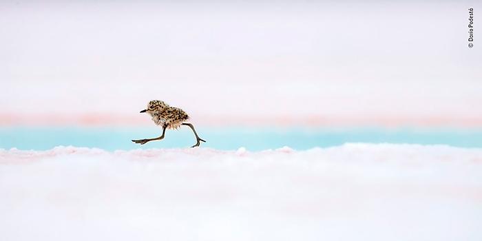 Wildlife Photographer of the Year 2018