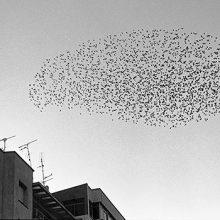 Geometría del azar, exposición de Javier Campano en La Fábrica