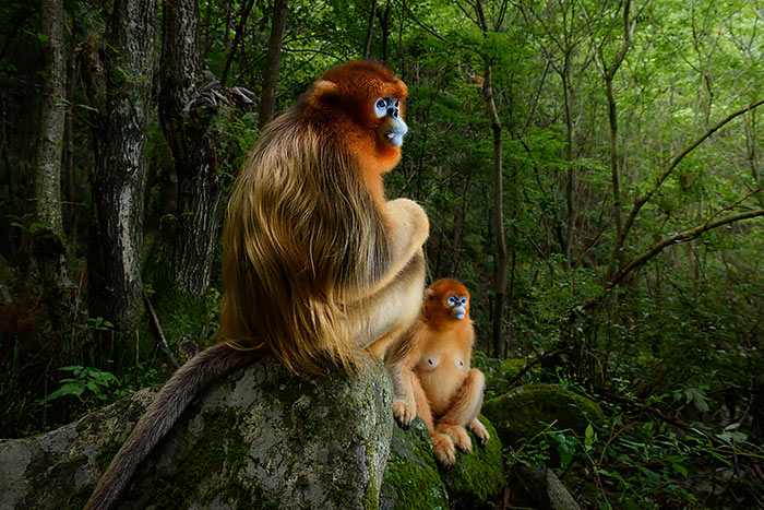 Exposición del Wildlife Photographer of the Year 2018 en Madrid