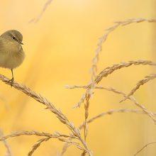 Las mejores imágenes de aves del concurso de la Feria de Turismo Ornitológico